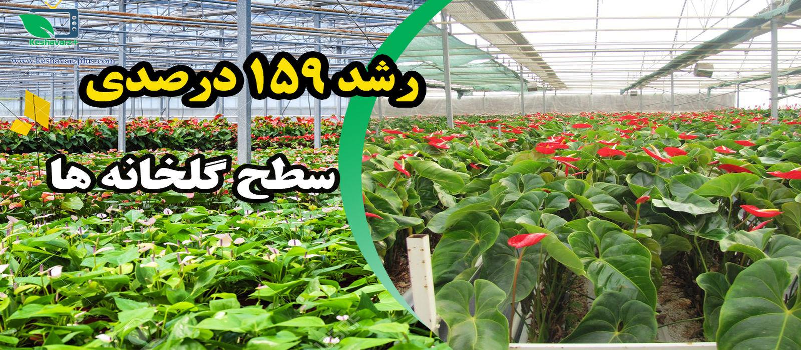 افزایش صادرات و اشتغال، ثمرات توسعه گلخانه ها