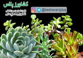 آموزش تولید کاکتوس در منزل و اطلاعاتی در رابطه با بیماریهای این گیاه از زبان غرفه داران نمایشگاه گل و گیاه تهران