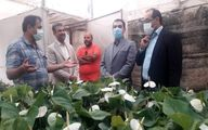 بازدید سرزده مشاوره وزیر از گلخانه ها در روز ملی گل